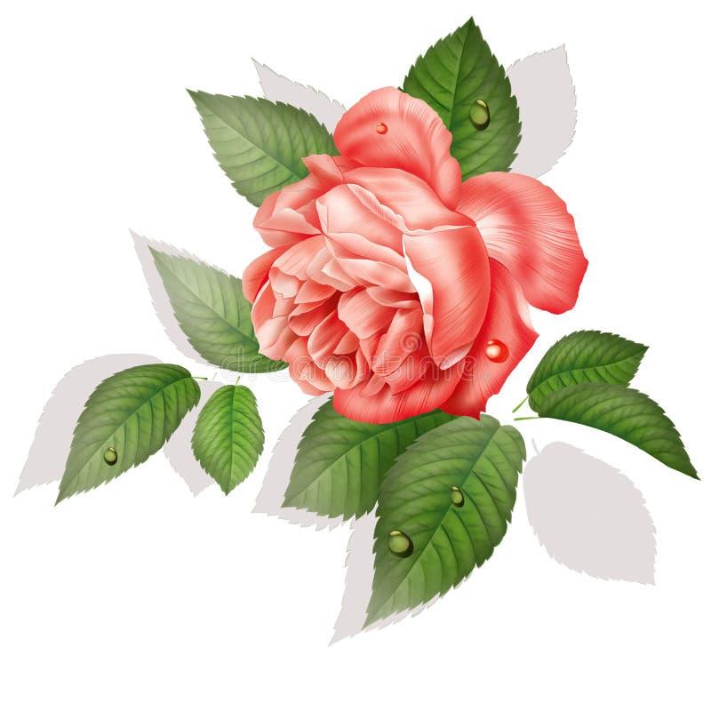 Rose fleur dessin peinture illustration stock - Dessin fleur rose ...