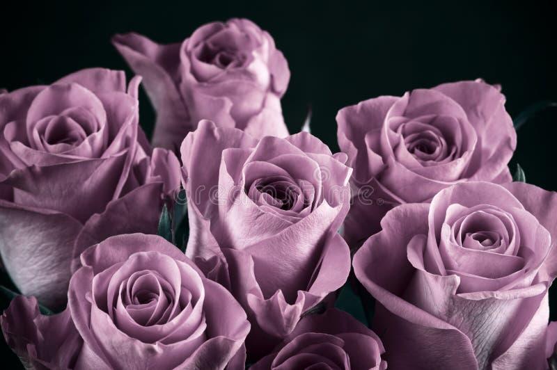 Rose fleurit le groupe photos stock