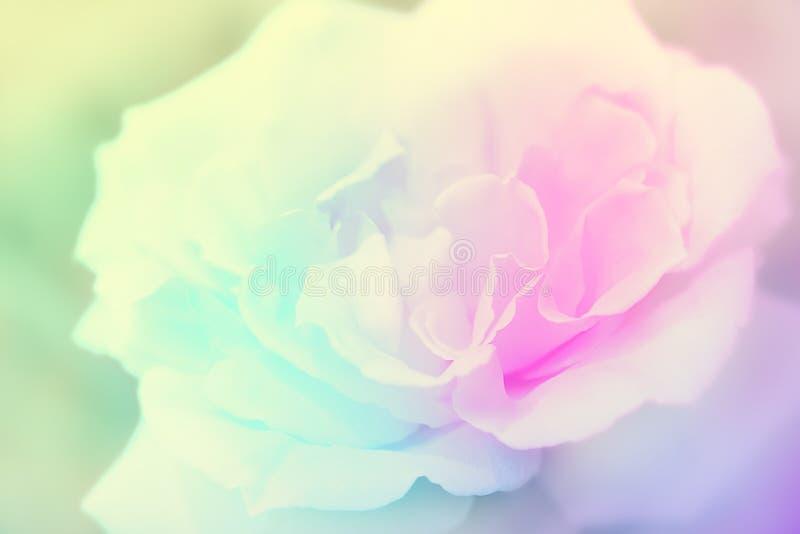 Rose fleurit le ressort de vintage de fond images libres de droits
