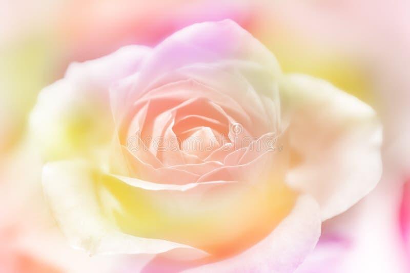 Rose fleurit le ressort de vintage de fond photographie stock
