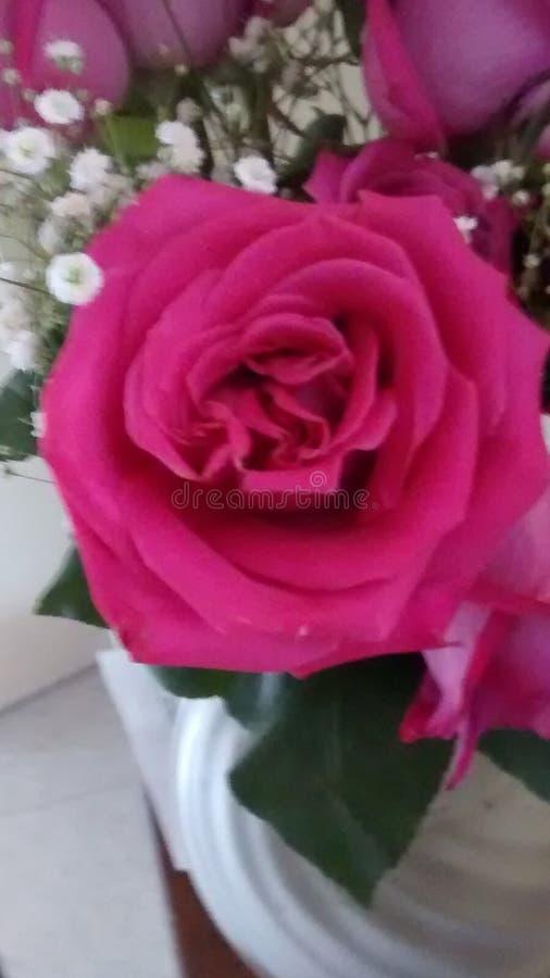 Rose Floral Arrangement imagenes de archivo