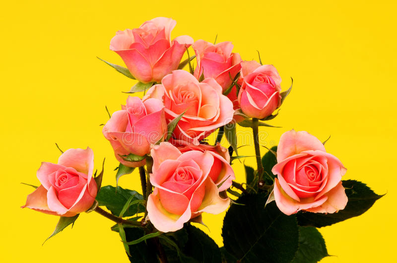 Rose Floral arrangement. Peach roses Floral arrangement isolated over a yellow background royalty free stock images