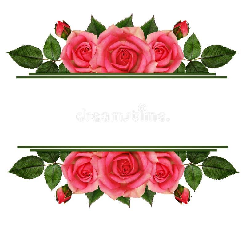 Rose florece los bordes stock de ilustración