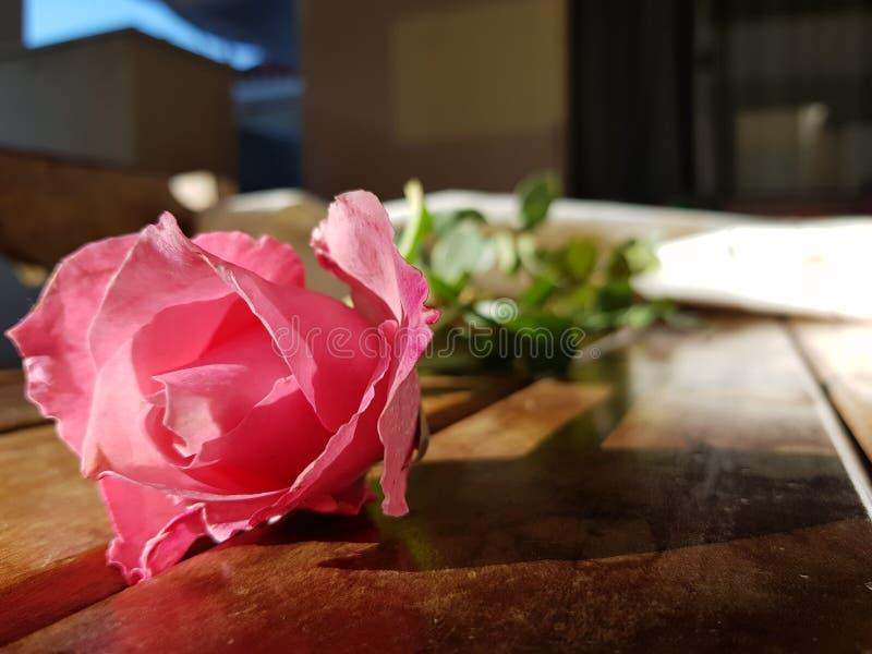 Rose Flower stock foto
