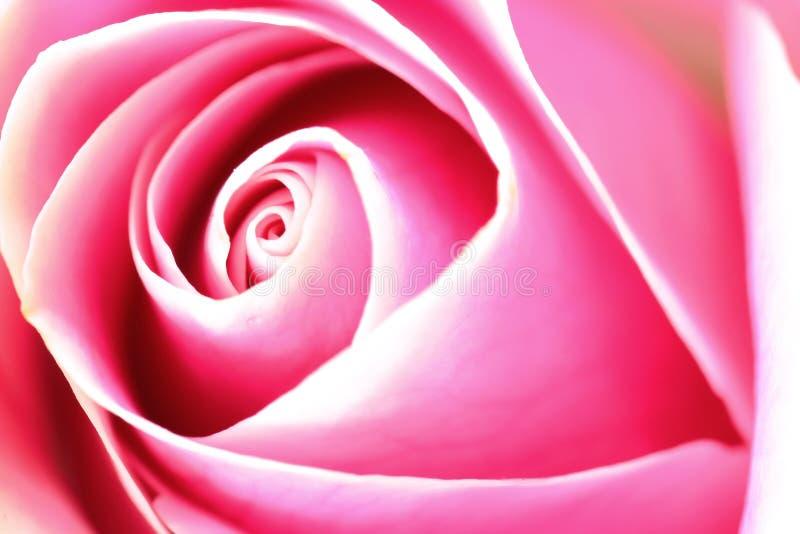 Download Rose flower stock image. Image of petal, background, design - 22441363