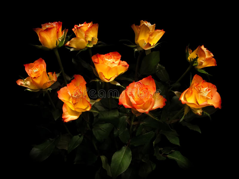 Download Rose flower. stock image. Image of green, bouquet, flowers - 23647847
