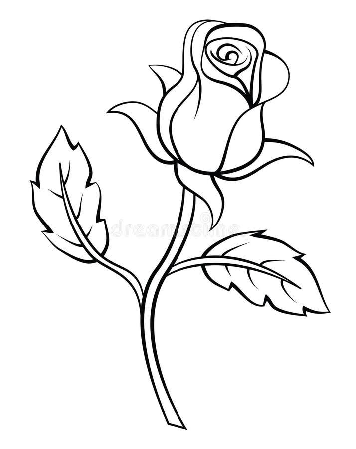 Rose Flower vector illustratie