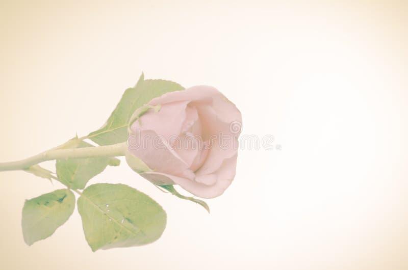 Download Rose Flower image stock. Image du pétale, ouvert, fleur - 56475385