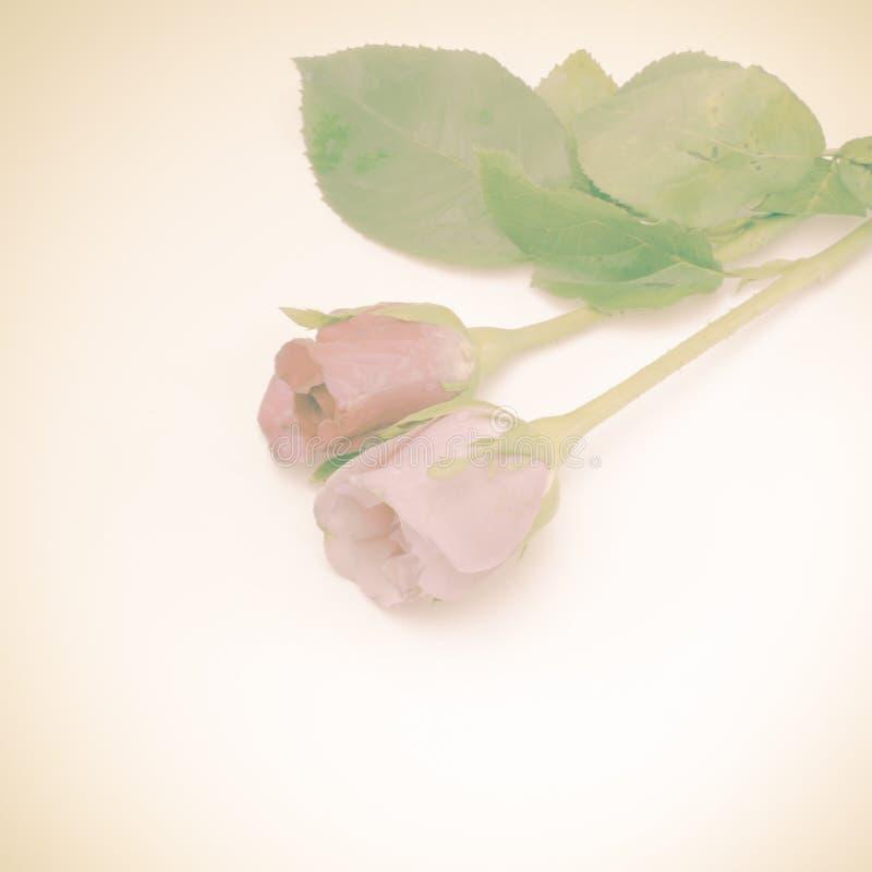 Download Rose Flower image stock. Image du fleur, fragilité, célébration - 56475395