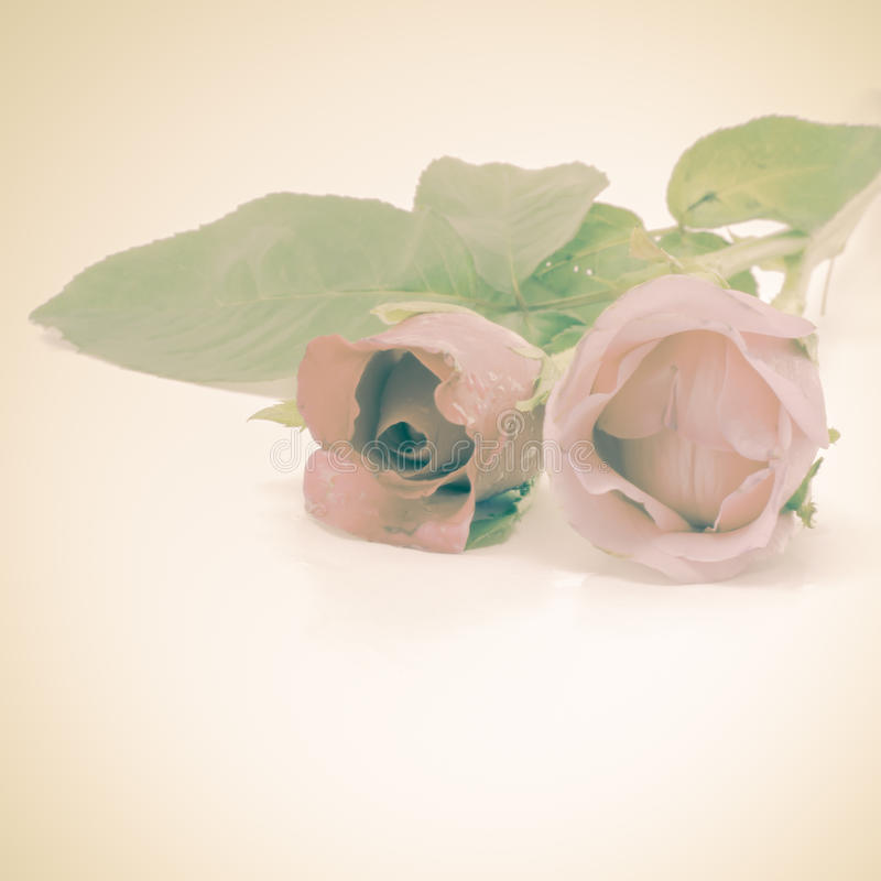 Download Rose Flower photo stock. Image du beau, arome, normal - 56475478