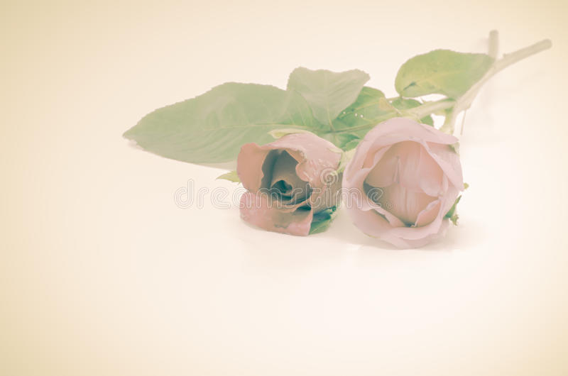Download Rose Flower image stock. Image du anniversaire, lumineux - 56475525