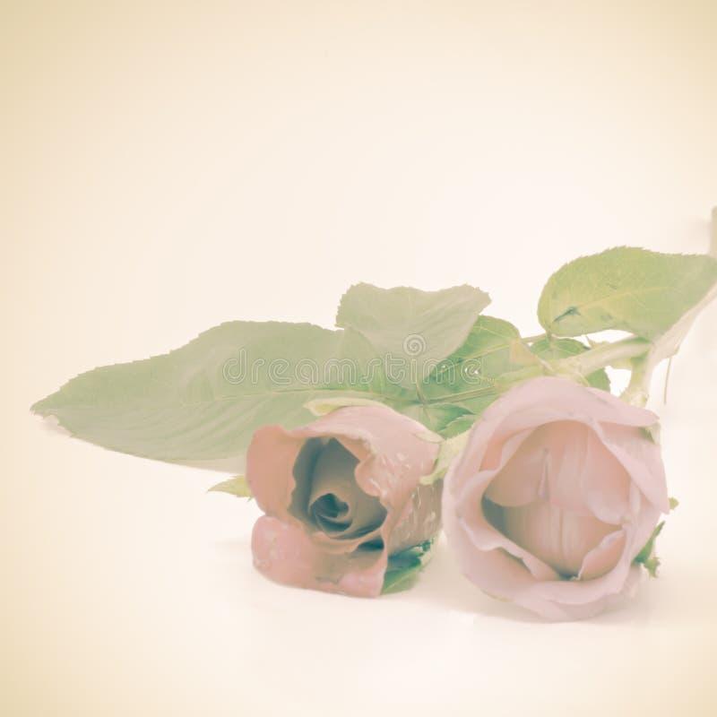 Download Rose Flower image stock. Image du carte, nature, fragilité - 56475539