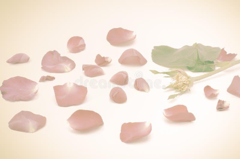 Download Rose Flower photo stock. Image du normal, bouquet, closeup - 56476936
