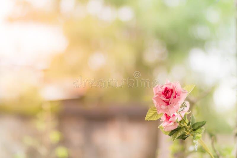 Rose Flower stockfotografie