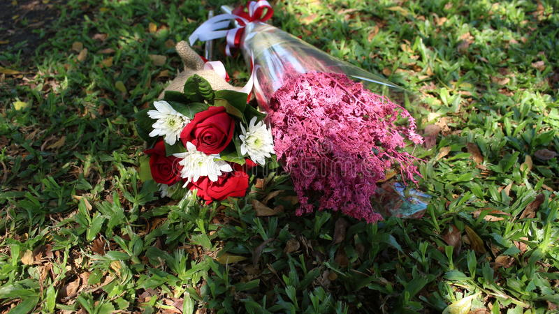 Rose Flower fotos de stock royalty free