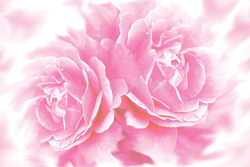 Download Rose flower background stock illustration. Illustration of border - 4689856