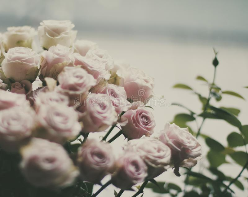Rose flower bouquet - wedding, holiday and floral garden styled concept. Elegant visuals royalty free stock photo