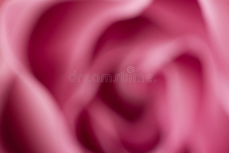 Rose flower close up. Macro, soft focus stock photography