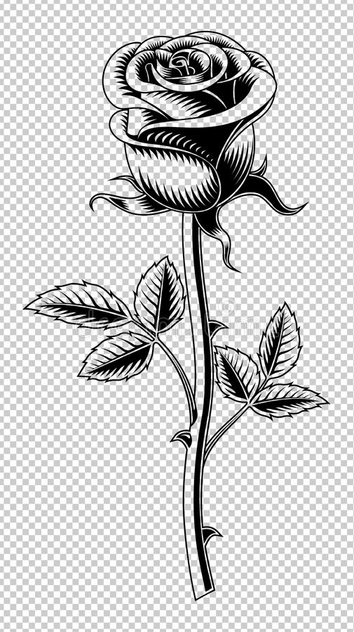 Rose flower drawing stock vector illustration of petal 111633493 download rose flower drawing stock vector illustration of petal 111633493 thecheapjerseys Choice Image