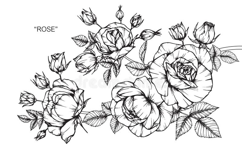 Line Art Rose Flower : Rose flower drawing and sketch stock illustration
