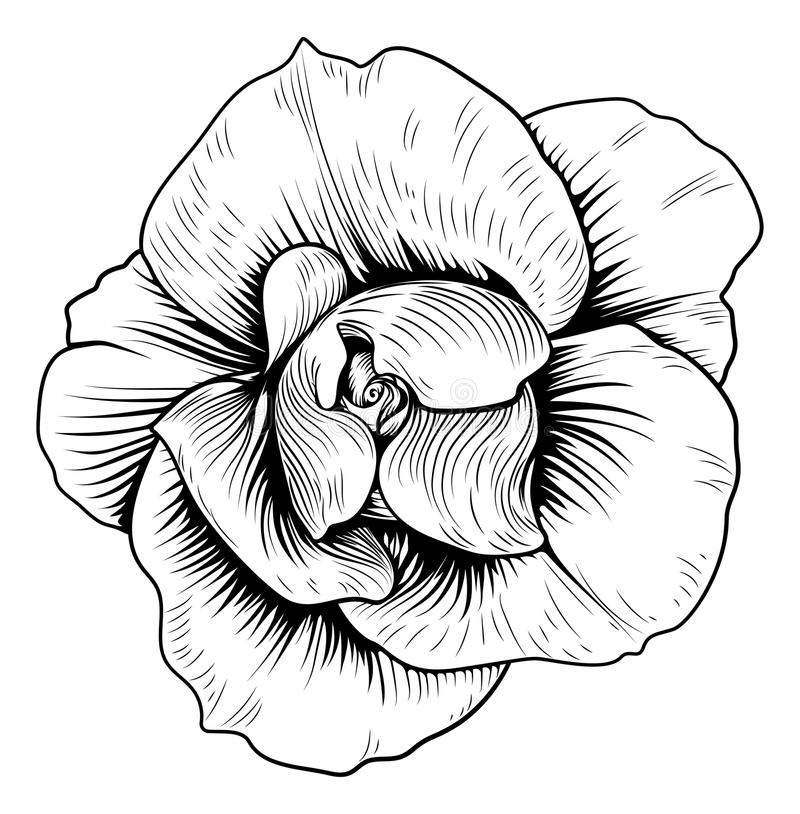 Rose Flower Engraved Vintage Woodcut Etching. A single rose woodcut flower in a vintage retro engraved etching style vector illustration