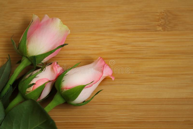 Rose flower with green foliage resting on a light wooden table royalty free stock image