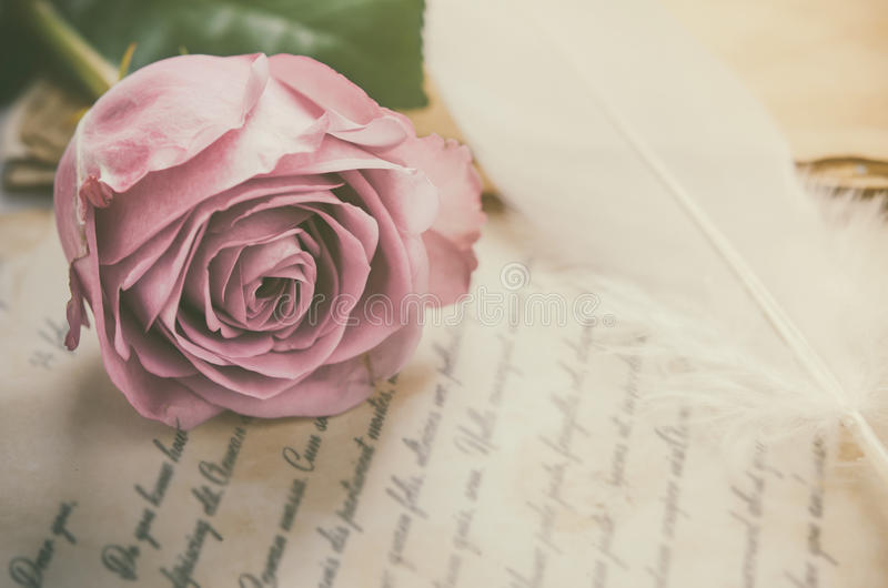 Rose flower with love letters with vintage tone. Close up of violet purple rose flower with love letters and feather quill, Rose and old paper with vintage and stock images