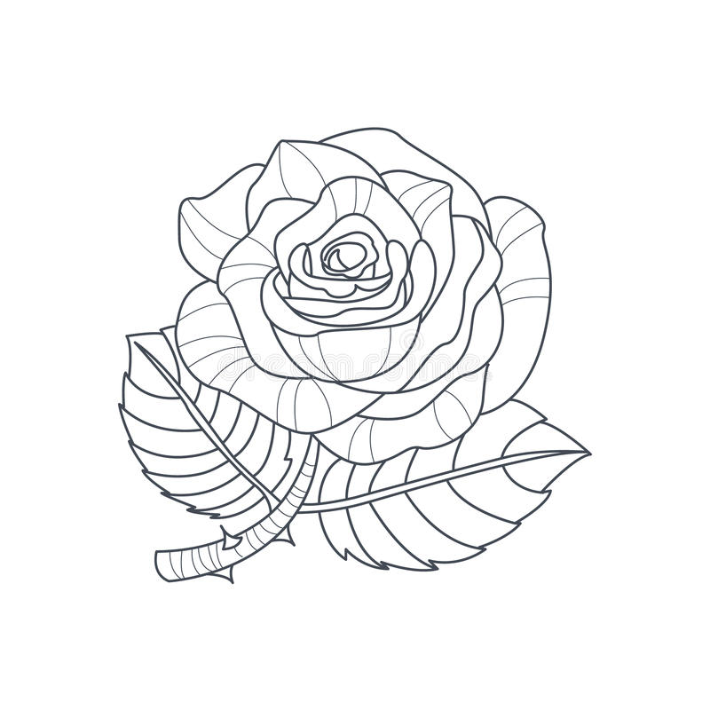 Download Rose Flower Monochrome Drawing For Coloring Book Stock Vector