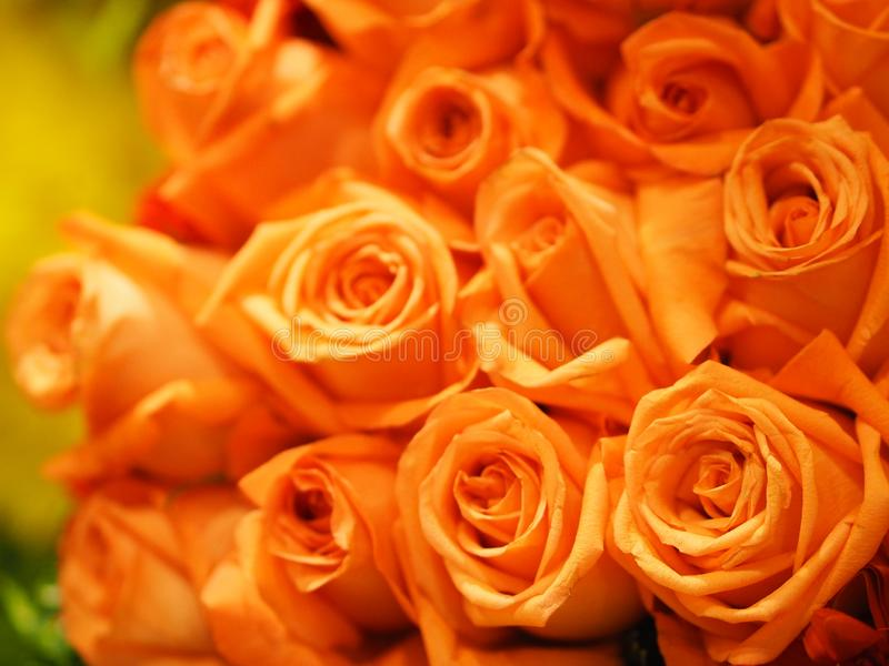 Orange Rose Flower Old Rose color arrangement Beautiful bouquet on blurred of nature background stock photos