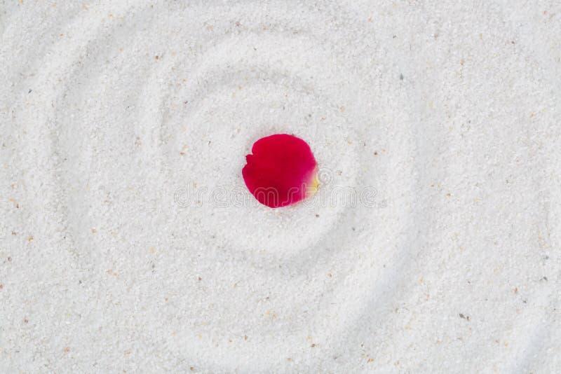Rose flower petal on the white sand. stock photo