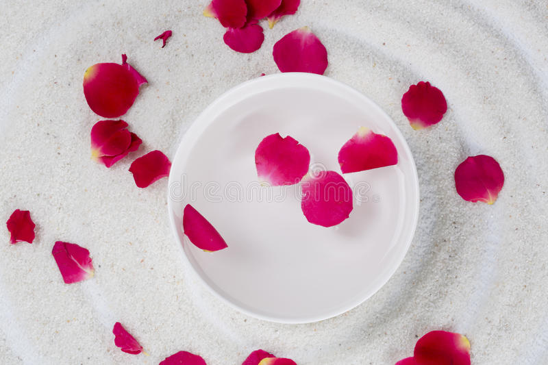 Rose flower petals stock photos
