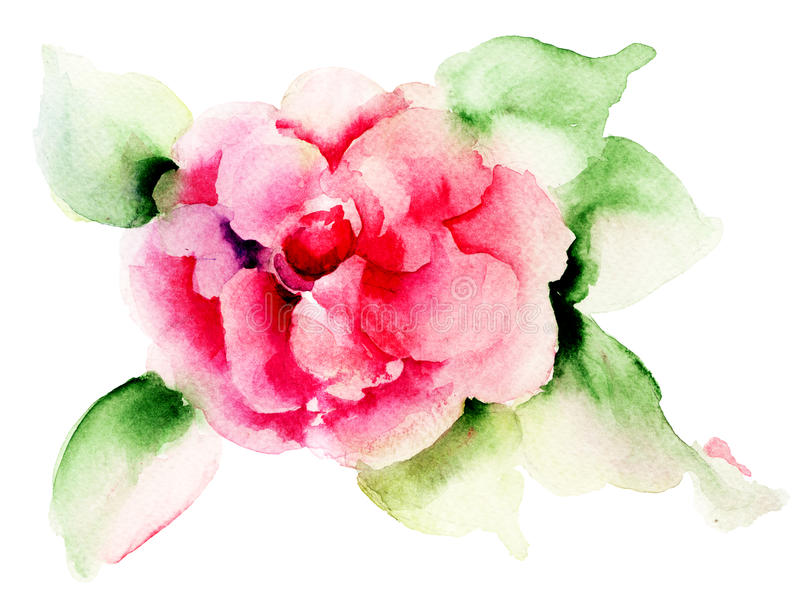 Rose flower. Red Rose flower, watecolor illustration stock illustration
