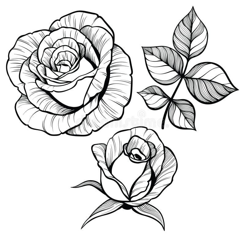 Rose flower set with a leaf vector illustration