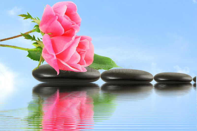 Rose flower on stone with water reflection in sky background. For love spa peace celebration valentine zen yoga and other web design background stock images