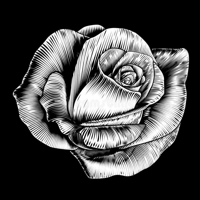 Rose Flower Vintage Style Woodcut grabó la aguafuerte ilustración del vector