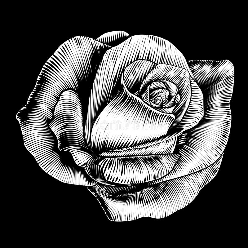 Rose Flower Vintage Style Woodcut inristade etsning vektor illustrationer
