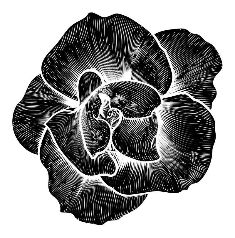 Rose Flower Vintage Woodcut Engraved etsning royaltyfri illustrationer