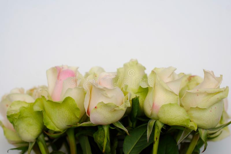 Rose Flower White Fragrant Flowers. Bouquet Of White And Pink Roses ...