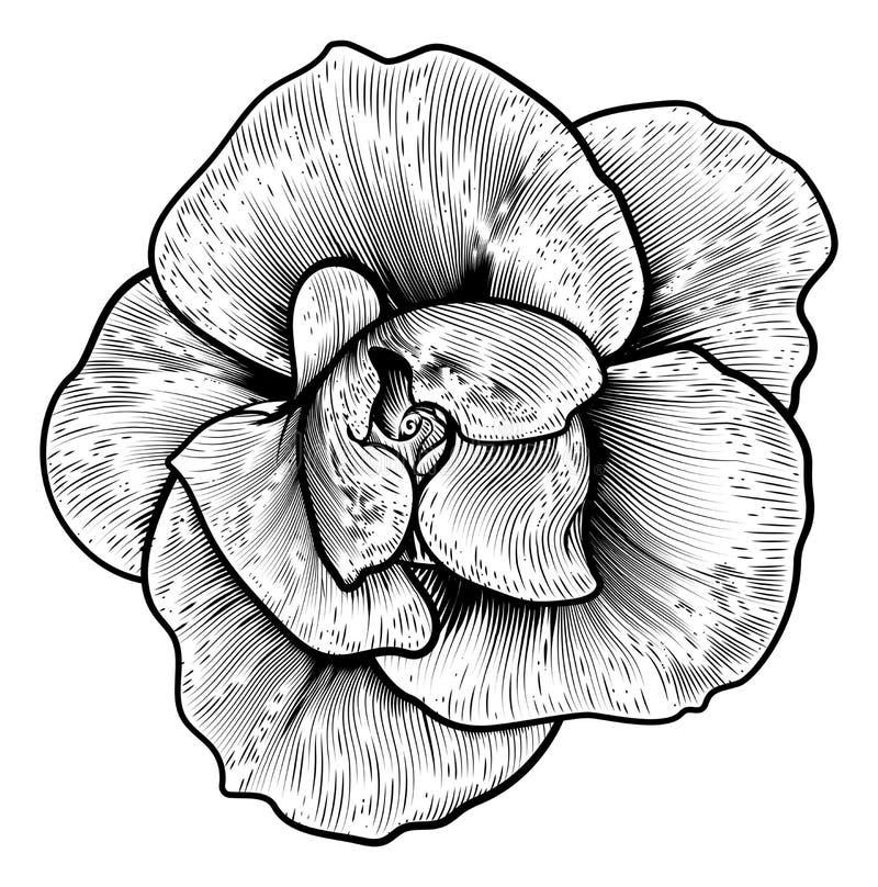 Rose Flower Woodcut Vintage Engraved etsning stock illustrationer