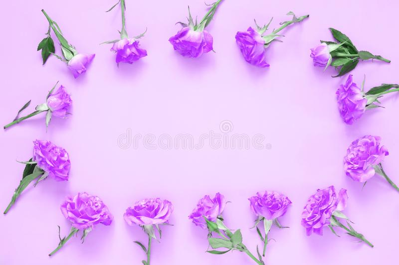 Rose flowers composition on pink background royalty free stock photos
