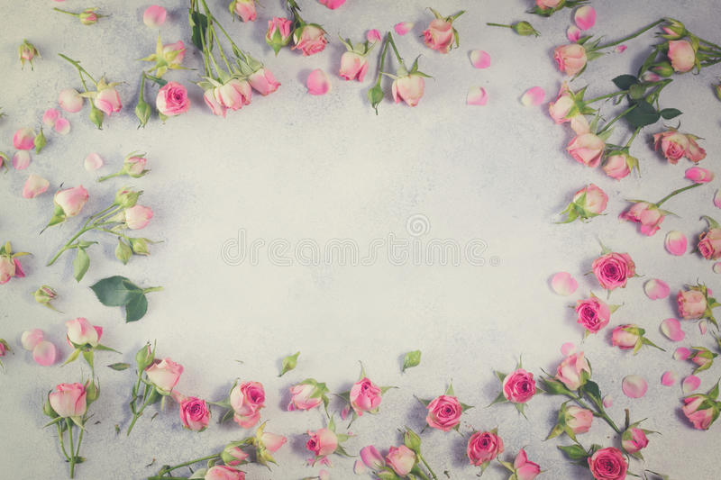 Rose Flowers rose et blanche photo libre de droits