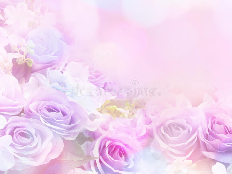 Rose flowers soft style with vintage filter effect. Floral design background stock images