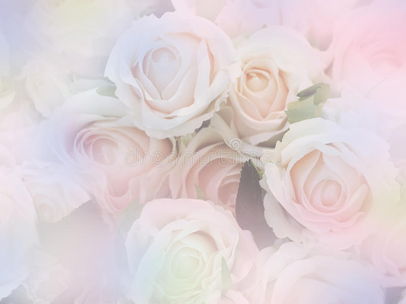 Rose flowers soft style with vintage filter effect royalty free stock photo