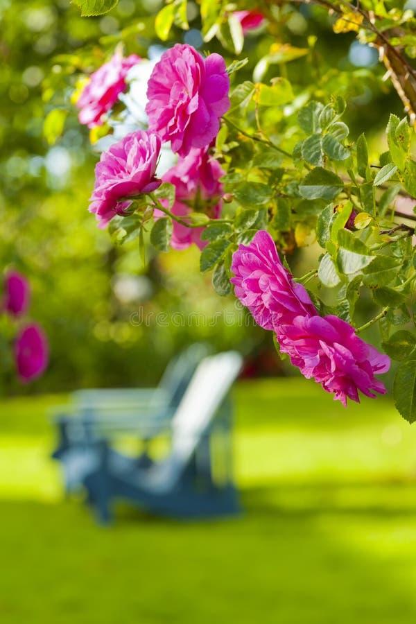 Rose Garden fotografie stock