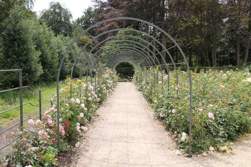 Rose Garden. photographie stock libre de droits