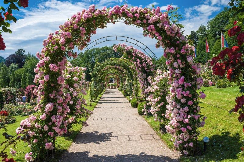 The rose garden Beutig in Baden-Baden. Black Forest, Baden-Wurttemberg, Germany, Europe stock photos