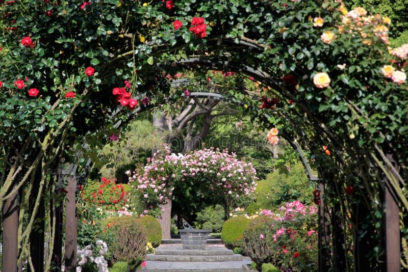 Rose garden in the Botanic Gardens royalty free stock image