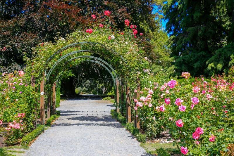 Rose Garden in de Botanische Tuin van Christchurch, Nieuw Zeeland stock afbeeldingen