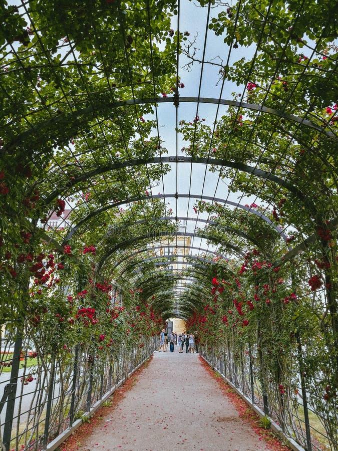 Rose Garden de Schonbrunn, Vienne images stock