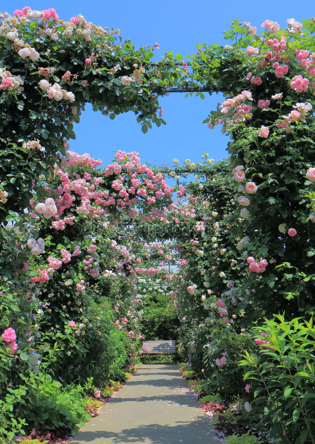 Free Rose Garden Flower Arcade Royalty Free Stock Photo - 94392495
